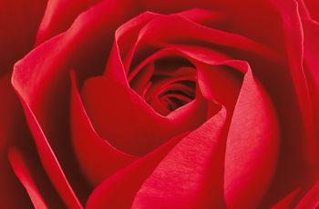 L´IMPORTANT C´EST LA ROSE Fotobehang