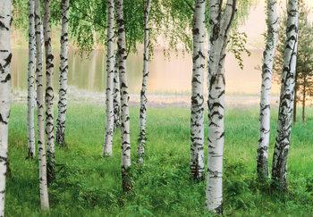 NORDIC FOREST Fotobehang