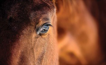 Fotomurale Horse Pony
