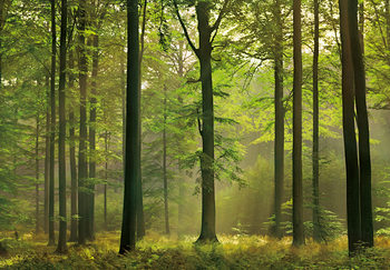 AUTUMN FOREST Fototapet