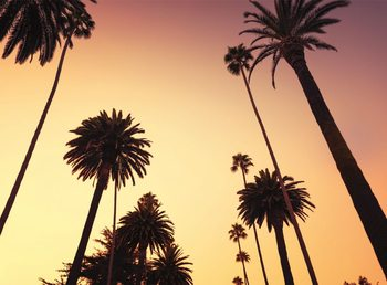 California - Palm Tree Fototapet