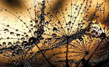 Dandelion Fototapet