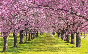Flowering Trees Fototapet