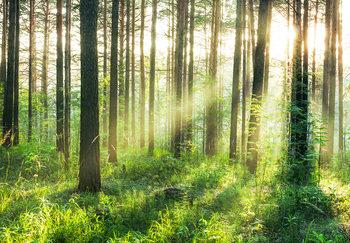 Erdő - Sunmbeams fotótapéta