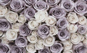 Roses Flowers Purple White Fali tapéta