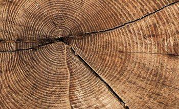 Baum Stumpf Ringe Fototapete