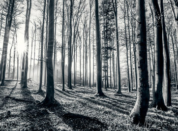 Der Wald - black and white Fototapete