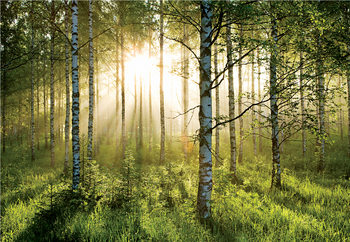 Der Wald - Golden Sunbeams Fototapete