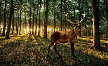 Hirsch Wald Bäume Natur Fototapete