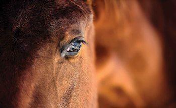 Pferd Auge Fototapete