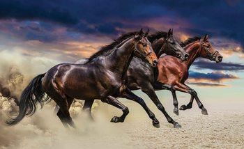 Pferde Wild Fototapete