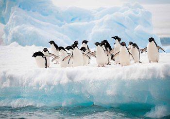 Pinguine Fototapete
