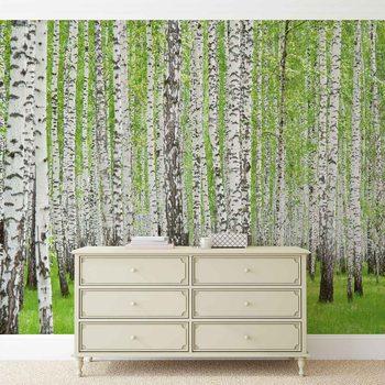 Wald Bäume Natur Fototapete