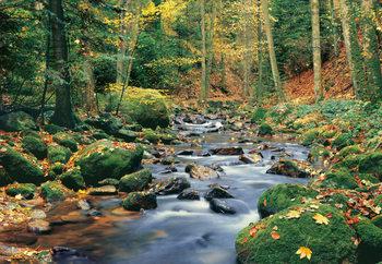 FOREST STREAM Fototapet