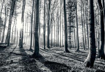 Las - Black and white Fototapeta