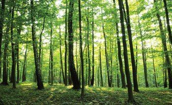 Fototapeta Lesní stromy zelená příroda