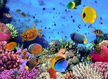 Fototapeta Moře - Under the sea