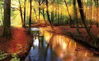 Fototapeta Potôčik v lese, lúče slnka
