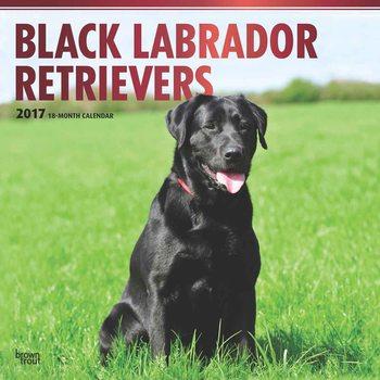 Kalendár 2017 Labrador Retriever - Black