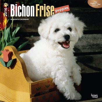 Kalendář 2017 Štěňata - Bichon Frisé