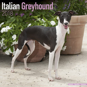 Italian Greyhound Kalendarz 2018