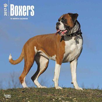 Kalender 2017 Deutscher Boxer