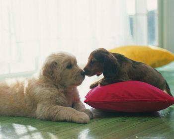 Puppies - Kus Mini plakat