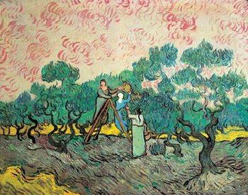 Reprodukce Ženy sbírající olivy, 1889