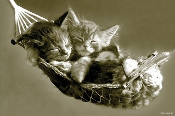 Plagát Keith Kimberlin - kittens in a hammock