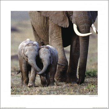 Elefant - Friends Kunsttryk