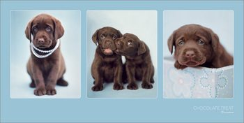 Rachael Hale - Chocolate Treat Reproduktion