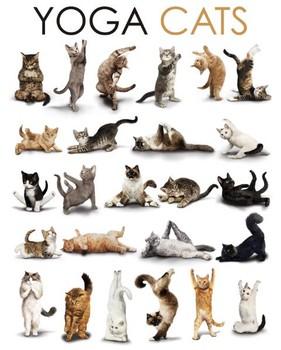 YOGA CATS - compilation Plakat