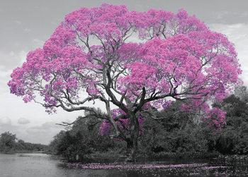Strom - kvety Poster