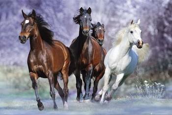 Running horses - bob langrish plakát