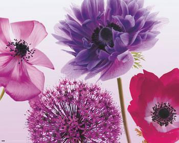 Purple summer  plakát, obraz