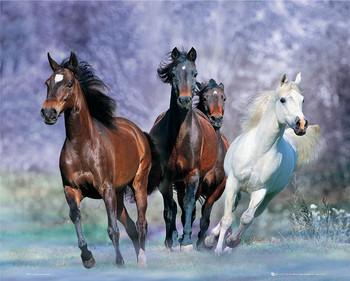 Plakát Running horses - bob langrish