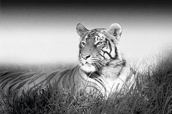 Plakat Tiger - B&W