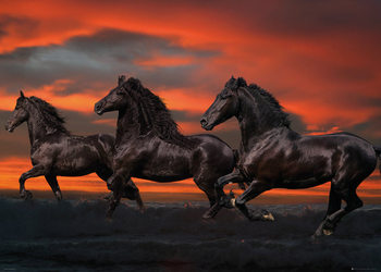 Póster Los caballos - Fantasy, Bob Langrish