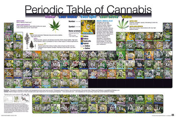 Periodic Table - Of Cannabis Poster / Kunst Poster