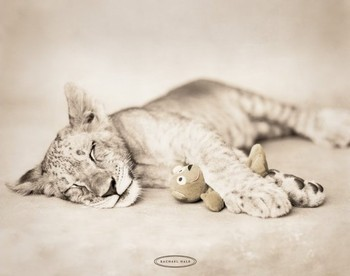 Poster Rachael Hale - arjuna & teddy