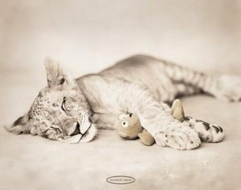 Rachael Hale - arjuna & teddy Poster