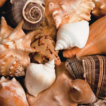 BEACHSIDE SHELLS Kunstdruck