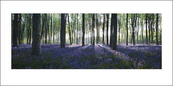 Der Wald - Blue Kunstdruck