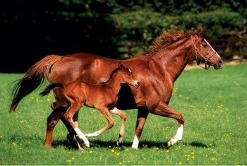 Poster Mare & Foal - horses