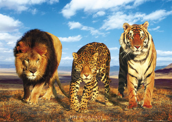 Poster Wild cats
