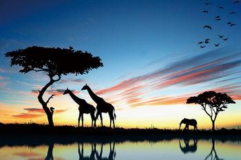 Skleněný Obraz Žirafy
