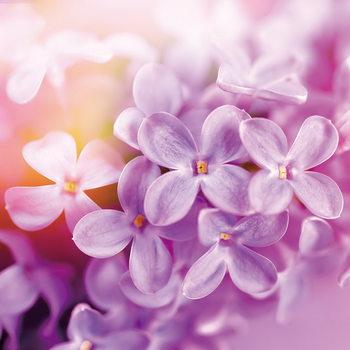 Puprle Blossoms Steklena slika