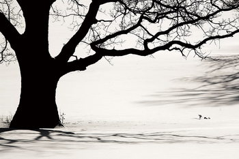 Tablouri pe sticla Tree - Black and White