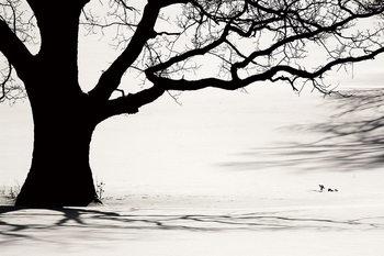 Üvegkép Tree - Black and White