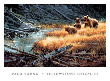 Yellowstone Grizzlies Festmény reprodukció